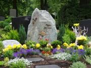Какую тую лучше посадить на кладбище, можно ли сажать и как правильно ухаживать, фото